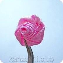7-obratnaya-storona-rozy